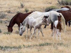 Horse Photos, Horse Pictures, Baby Sea Turtles, Wild Mustangs, Appaloosa, Horse Photography, Wild Hearts, Wild Horses, Animal Quotes