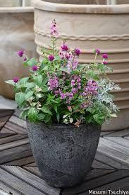 千日紅 寄せ植え - Google 検索 Planter Pots, Google