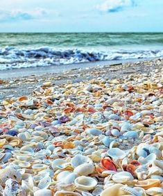 """Shell Beach Sanibel Island, Florida Ummm where is this? I live here, and never heard of """"shell beach"""" . This looks like Captiva Island Captiva Island, Island Beach, Shell Island, Sanibel Island Shells, Honeymoon Island, Pine Island, Places To Travel, Places To See, Florida Keys"""