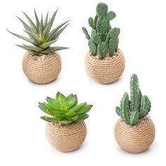 Bring natural flair to your space with these potted succulents. The rounded rope pots lend a touch of depth and texture, and pebble accents at the top help these faux plants project realistic appeal. Four assorted styles to choose from. Decoration Cactus, Decoration Plante, Rope Crafts, Diy Home Crafts, House Plants Decor, Plant Decor, Produce Baskets, Plant Projects, Succulent Pots