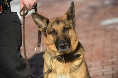 K9 Blek expected to make full recovery. #RIP OfficerEslary