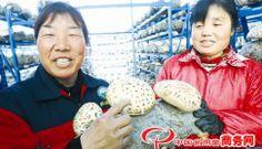 New mushroom variety - The giant Flower mushroom values 58 CNY
