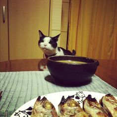 ノドグロ、ください!#cat - @rivgood- #webstagram