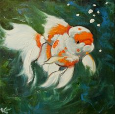 Fish ~beautiful pic would like to have this on xanders wall