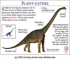 Real+Dinosaur+Pictures+and+Names | Dinosaurs pictures and names