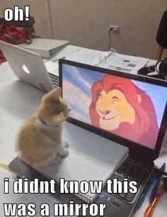 All Cats Can Teach us a Lesson in Confidence - LOLcats is the best place to find and submit funny cat memes and other silly cat materials to share with the world. We find the funny cats that make you LOL so that you don't have to. Humor Animal, Animal Quotes, Animal Memes, Animal Mashups, Funny Animal Pictures, Funny Animals, Cute Animals, Funny Photos, Animals Kissing