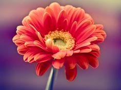 Si eres fan de las plantas y estas en pro del medio ambiente tal vez te interese este post, pues aquí te digo qué plantas son perfectas para purificar el aire de tu hogar, ya sea absorbiendo la cantidad de monóxido de carbono o bien ayudando a producir más oxigeno. Visita nuestros catálogos de jardinería y encuentra los mejores productos para darle mantenimiento a tus plantas. http://www.linio.com.mx/ferreteria/jardineria/
