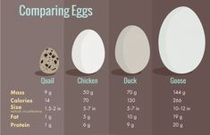 Egg Carton Labels: Comparing Eggs - Chicken, Duck, Goose, and Quail