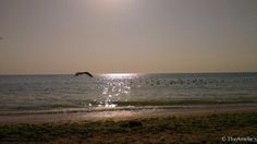 Black Sea and morning colors Black Sea, Celestial, Colors, Photos, Outdoor, Outdoors, Pictures, Colour, Outdoor Games