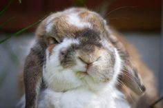 heh! who says bunnies have no expressions?