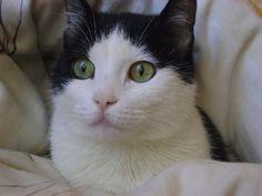 Adı : Betüş Hanım Irkı : Tekir Kedi Cinsiyet : Dişi Kedi