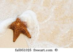 Free Art Print of Red Starfish On A Sand Beach. Red Starfish On A Sand Beach Near Ocean | FreeArt | fa6010469