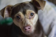 STOLEN DOG: 07/27/2017 - San Jose, California, CA, United States. Ref#: S34686 - #CritterAlert #StolenPet #StolenDog
