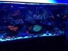 Idea of Salt water Aquarium - powered by HyperKoral and Calanus - SICCE
