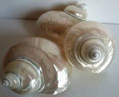 Shiny polished smooth turbo shells. Use for craft supplies, nautical accents wedding cake, beach wedding, hermit crab home. Shell collectors gift. Can be decorated with beads, trim for a festive gift. Large rare size 4  with a 1 1/4 opening. Mixes well with other objects to create an unexpected natural treasure.