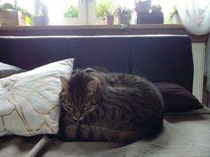 Cat Čiko