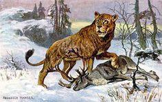 cave lion by Heinrich Harder