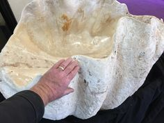 Huge fossil clam