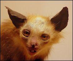 taxidermies d animaux horribles wtf   Taxidermies danimaux horribles   taxidermie photo image horreur GIF fail empaille empaillage