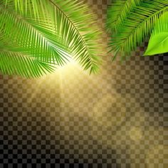 Forest Tropical Leaves With Sun Ray Light Glow Effects Vector and PNG Light Background Images, Smoke Background, Background Banner, Lights Background, Cartoon Background, Plant Background, Portrait Background, Background For Photography, Leaf Vector
