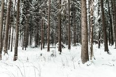 Free Image: Snow in Forest | Download more on picjumbo.com!