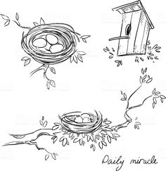Hand Drawn Nests Birdhouse Line Drawing Stock Vector (Royalty Free) 430941712 Landscape Drawings, Bird Drawings, Easy Drawings, Bird Line Drawing, Nester, Animal Doodles, Scratch Art, Borders And Frames, House Drawing