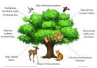 BLOG EDUKACYJNY DLA DZIECI: Rola i znaczenie drzew Primary Teaching, Kids And Parenting, Montessori, Activities For Kids, Diy And Crafts, Survival, Education, School, Html