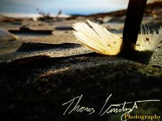 Feather on the beach