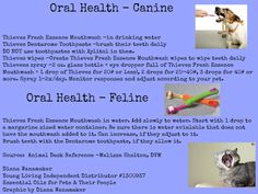Improving and changing Oral Health for dogs and cats, using YLiving essential oils. Diana Wanamaker Essential Oils for Pets & Their People www.essentialoilspetcafe.com