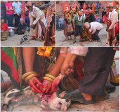 "The Gadimai Slaughter has been in full swing-APPALLING. Nepal doesn't want the world to see these photos or video of the ""festival"" because it hurts tourism---REALLY!?!"