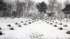 İstanbul'dan kar fotoğrafları