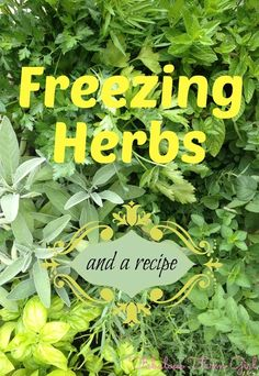 Freezing Herbs by FabulousFarmGirl. Plus a fabulous recipe for Citrus marinade. Freeze Herbs, Organic Gardening, Herb Gardening, Herbs Garden, Farm Gardens, Veggie Gardens, Spices And Herbs, Healing Herbs, Growing Herbs