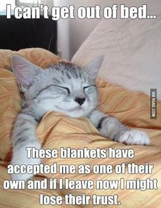 Cat Humor: I can't get out of bed… These blankets have accepted me as one of there own and if I leave now I might lose their trust.
