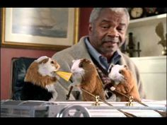 Guinea Pigs Row Tiny Boat - Easier Way to Save - GEICO commercial - I totally love this commercial.
