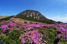 한라산 - 산철쭉군락과 화구벽 (Mt. Hallasan, Korea)