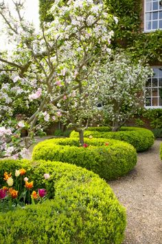 """What a great idea! boxwood """"doughnuts"""". West Green House"""