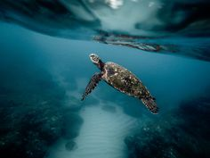 Sri Lanka, referred to as the 'pearl in the Indian Ocean' offers world-class Scuba- Diving and Snorkeling sites. 🐢 Best time is October - February for the south-coast 🌴 📷 Ani Sr Lanka Cozumel, Photos Sous-marines, Free Photos, Grands Lacs, Enjoy The Ride, Cairns Australia, Australia 2017, Australia Travel, Nature
