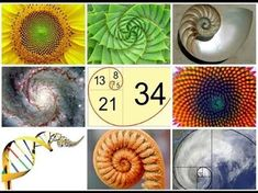 """Our beautiful world made up of sacred geometry, mystery, and wonder. """"Where there is matter, there is geometry"""" ~ Johannes Kepler. Golden Ratio In Nature, Fibonacci Sequence In Nature, Johannes Kepler, Spirals In Nature, The Golden Mean, Divine Proportion, Sacred Architecture, Architecture Tattoo, Geometry Architecture"""