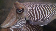Duiken in Zeeland Tube, Films, Pets, Animals, Movies, Animales, Animaux, Cinema, Animal