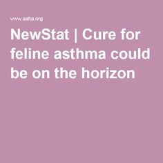 NewStat | Cure for feline asthma could be on the horizon
