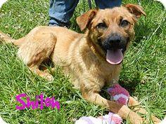 SHILOH...Lawrenceburg, TN - Chow Chow Mix. Meet Shiloh, a dog for adoption. http://www.adoptapet.com/pet/10978616-lawrenceburg-tennessee-chow-chow-mix