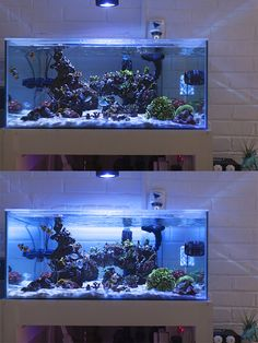 Saltwater Aquarium - Find incredible deals on Saltwater Aquarium and Saltwater Aquarium accessories. Let us show you how to save money on Saltwater Aquarium NOW! Aquarium Aquascape, Reef Aquascaping, Sea Aquarium, Aquarium Setup, Home Aquarium, Marine Aquarium, Planted Aquarium, Saltwater Fish Tanks, Saltwater Aquarium