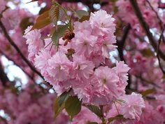 Love this flowering tree