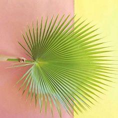 2,403 отметок «Нравится», 21 комментариев — LOTTE VAN BAALEN (@plantsonpink) в Instagram: «#PlantsOnPink by @pepsivanilla»