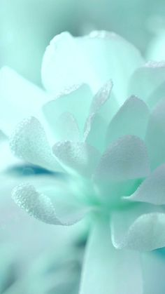 ideas wallpaper blue tiffany turquoise for 2019 Mint Green Wallpaper Iphone, Pastell Wallpaper, Mint Green Aesthetic, Aesthetic Colors, Pastel Flowers, Pastel Colors, Flora Flowers, White Flowers, Photo Bleu
