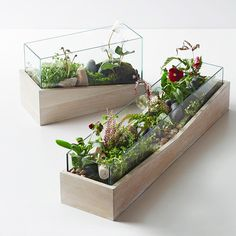 Plant The Perfect Terrarium With Putnam & Putnam - Front + Main