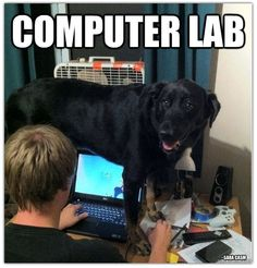 If only this is what a computer lab really was. :P