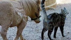 Kuda Lucu Dan Unik https://www.youtube.com/watch?v=NNTOsIbfKDE