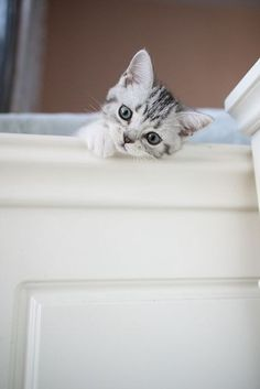 Cute Kittens, Kittens And Puppies, Pretty Cats, Beautiful Cats, Animals Beautiful, Baby Animals, Funny Animals, Cute Animals, Crazy Cat Lady