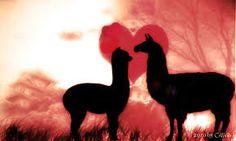 Image result for da llamas